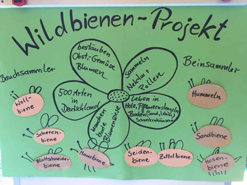 Plakat zum Wildbienen-Projekt