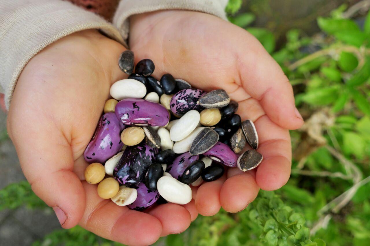 Kinderhände mit verschiedenen Samen