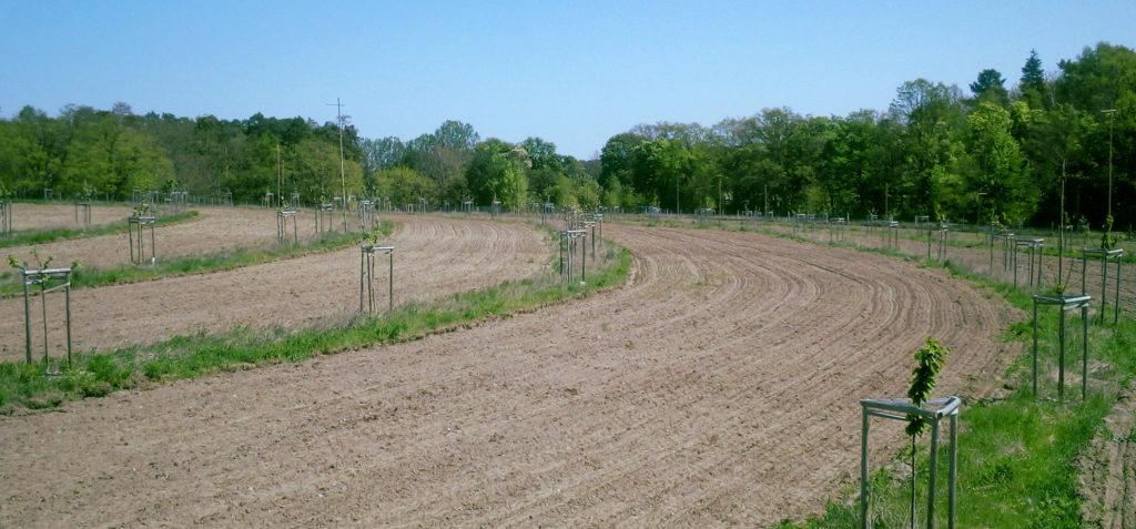 Agroforstsystem mit Keyline Design